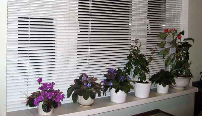 Элементы дизайна комнатных растений